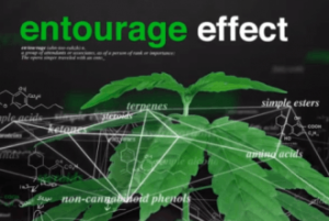 debunked-myths-marijuana-7-chemicals-entourage-effect